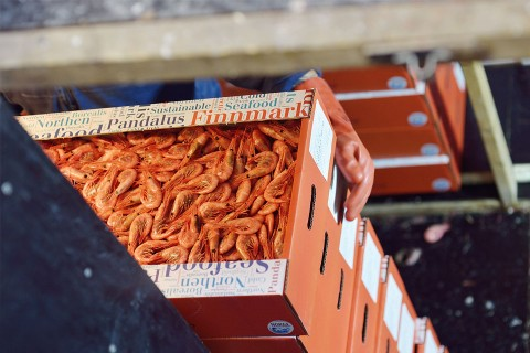 Fresh shrimps on their way to the market